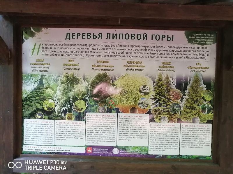 """Экологическая тропа """"Липовая гора"""""""
